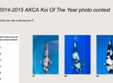 2014-2015-akca-koi-of-the-year-photo-contest